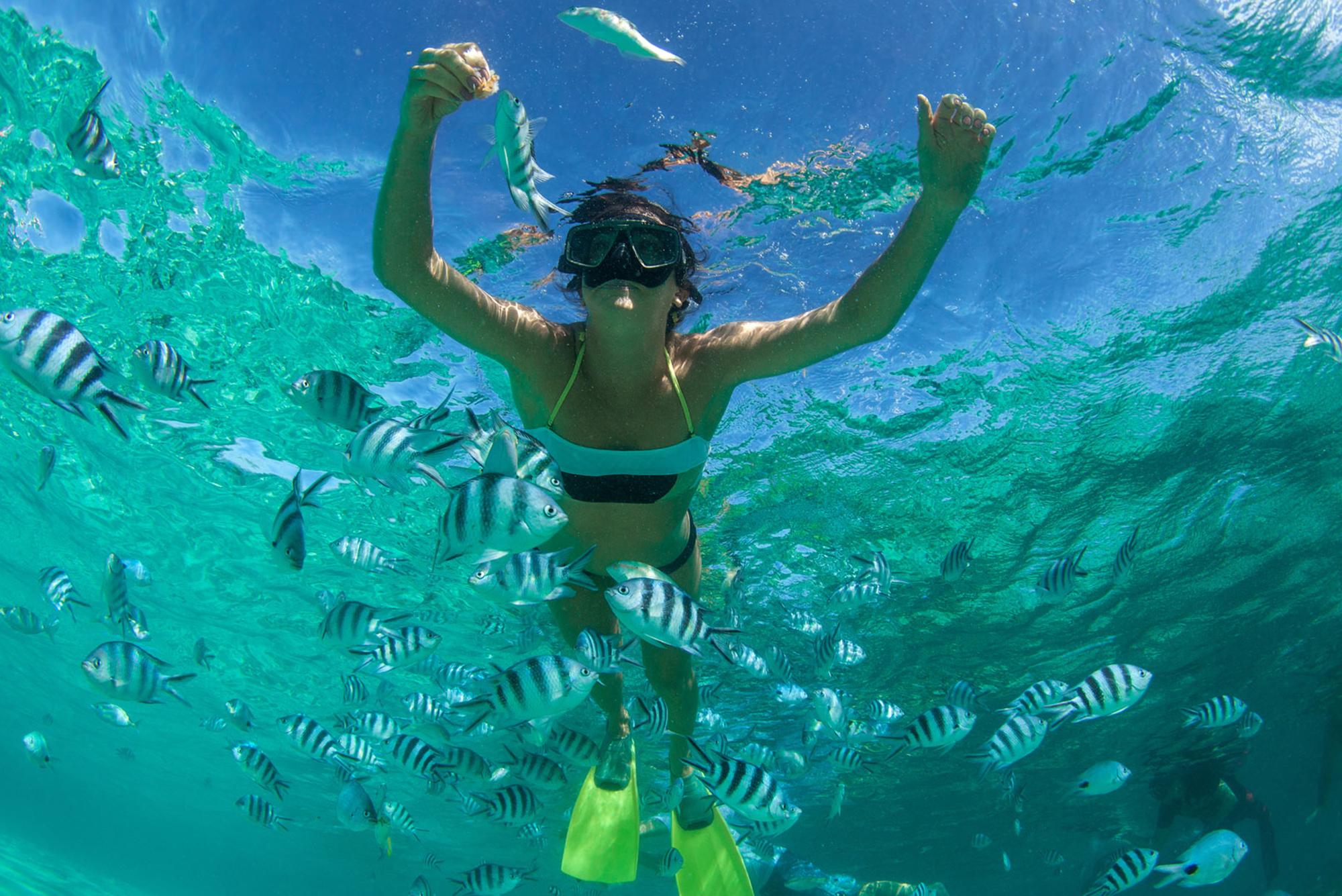 Snorkeling Indian Ocean