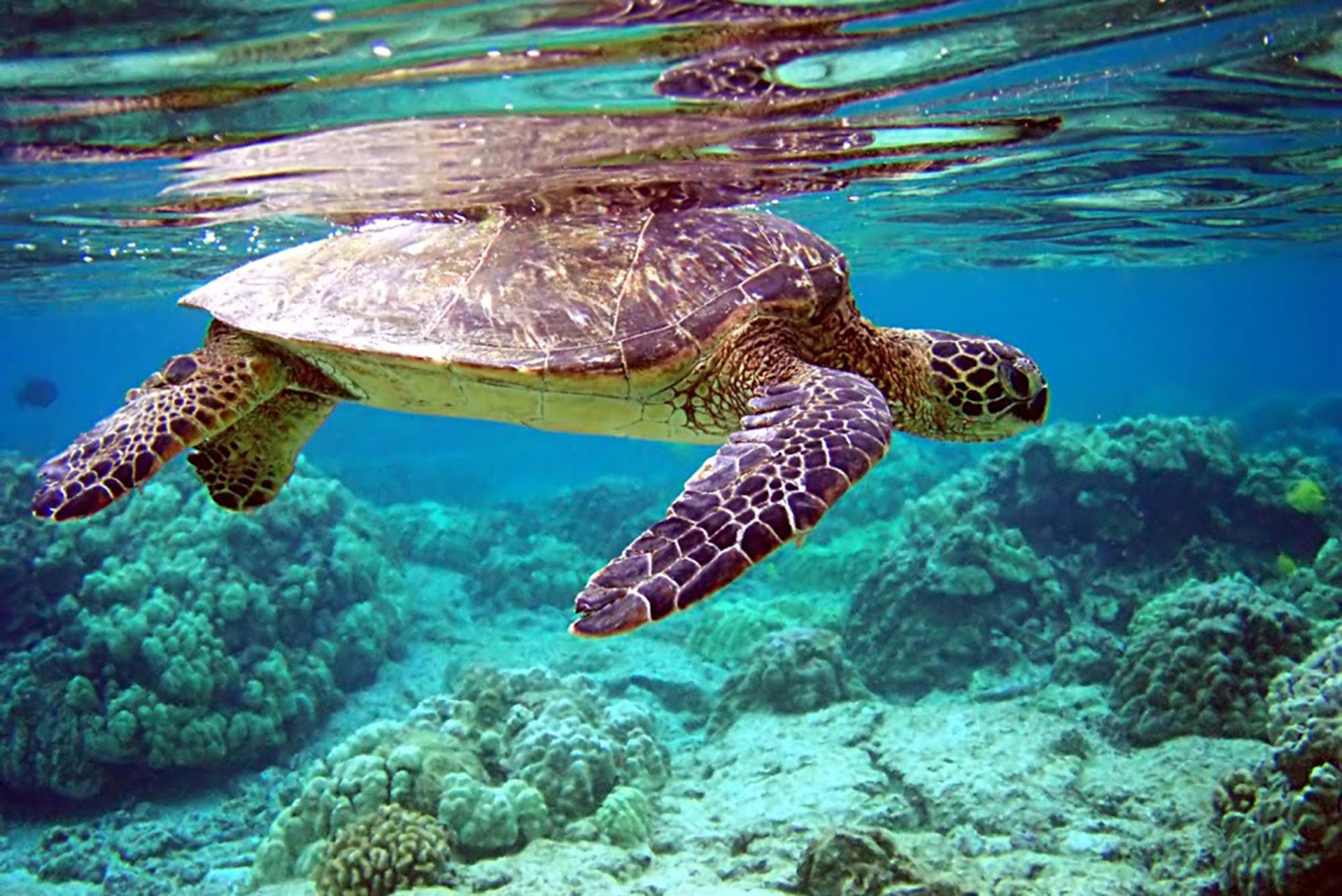На Мальдивах очень легко поближе познакомиться с морскими обитателями