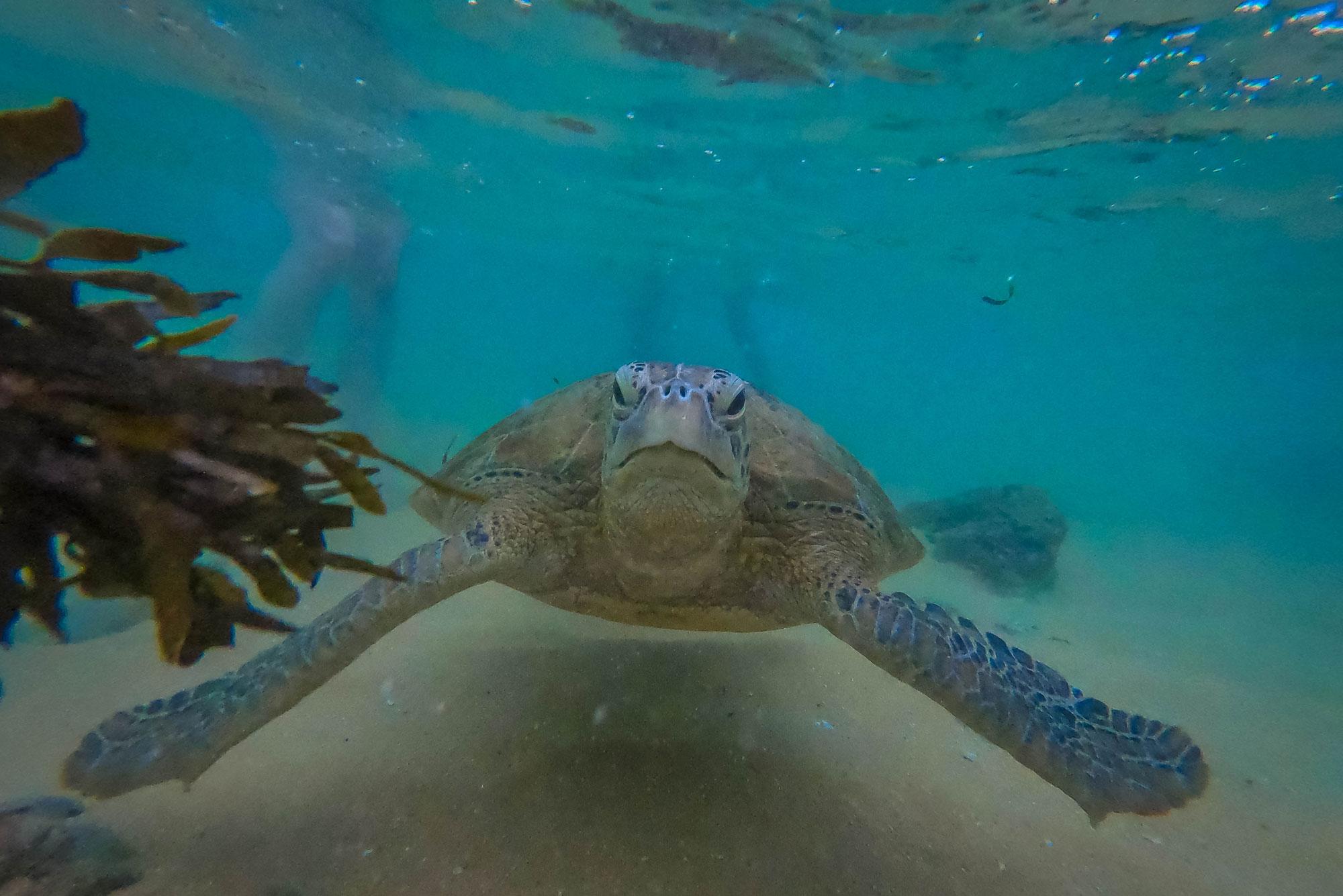 что доброжелательность, гигантские черепахи на шри ланка фото тигровых креветок