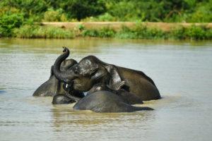 Сафари на Шри Ланке