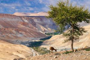 Путешествие в пустыню Негев