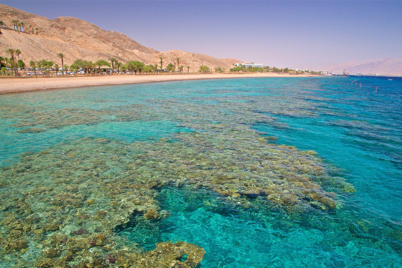Путешествие в Эйлат к коралловому рифу